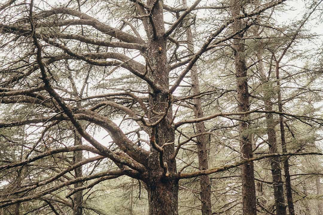 weddin camping écoresponsable durable - Garanties